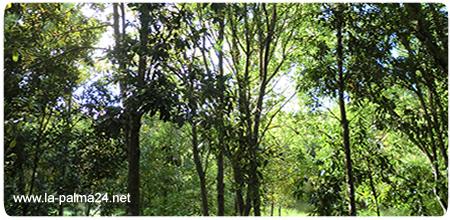 Cubo de la Galga - Biosph�ren-Reservat von Los Tilos