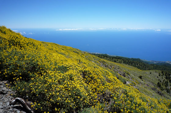img La Palma