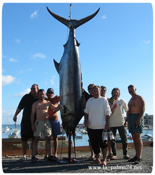 Big-Game-Fishing - Hochseeangeln